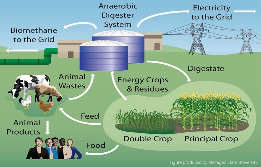 Sequential cropping could resurrect bio-fuel industry