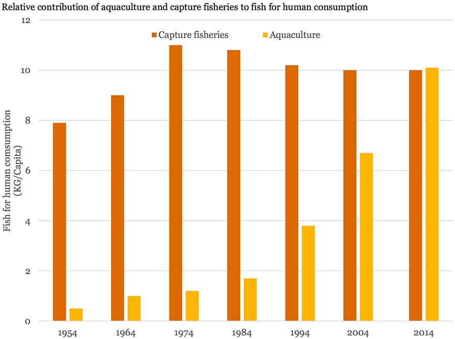Relative contribution of aquaculture and capture fisheries to fish for human consumption