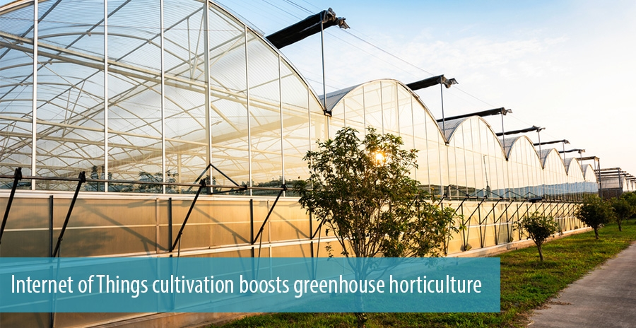 Internet of Things cultivation boosts greenhouse horticulture