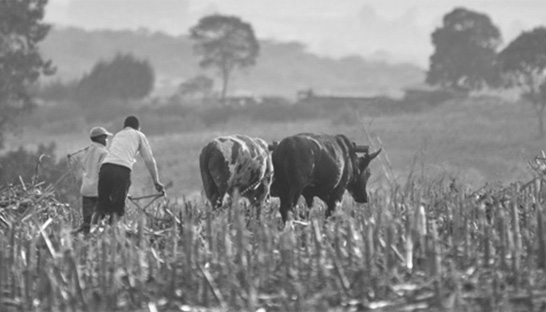 Acumen & Bain launch roadmap for smallholder farmers
