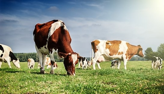 Roland Berger: Dutch dairy industry has good prognosis