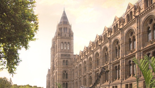 Deloitte advises on planning permission for Natural History Museum grounds