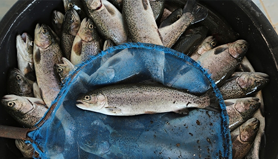 Aquaculture booms amid fears of overfishing