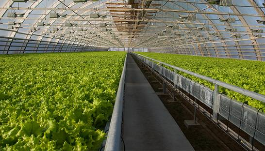 First Consulting implements data platform in greenhouse horticulture